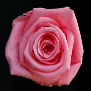 【即納】 ブリザードフラワー 花材 ベイビー ローズ【シュガーピンク 小分け 1輪入】 フロールエバー