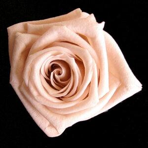【即納】 ブリザードフラワー 花材 ベイビー ローズ【ヌードピンク 小分け 1輪入】 フロールエバー