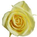 【即納】 プリザーブドフラワー 花材 ミミ ローズ【モーニングイエロー 小分け 1輪入】 大地農園