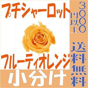 【即納】 プリザーブドフラワー 花材 プチシャーロット【フルーティオレンジ 小分け 1輪入】大地農園