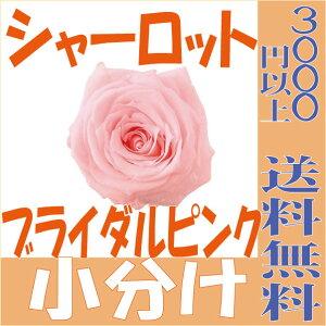 【即納】 プリザーブドフラワー 花材 シャーロット【ブライダルピンク 小分け 1輪入】大地農園
