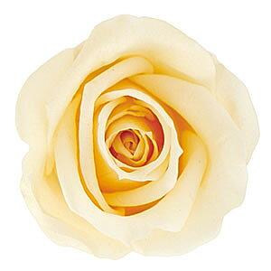 【即納】 プリザーブドフラワー 花材 ニーナ シュークリーム【小分け 1輪】 プリマヴェーラ