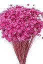 【即納】 プリザーブドフラワー 花材 30%OFF スターフラワーミニ【ストロベリー 袋 約12g入】 大地農園