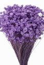 【即納】 プリザーブドフラワー 花材 30%OFF スターフラワーミニ【ライトパープル 袋 約12g入】 大地農園