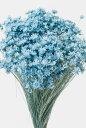 【即納】 プリザーブドフラワー 花材 30%OFF スターフラワーミニ【ベビーブルー 袋 約12g入】 大地農園