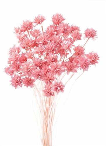 【即納】 プリザーブドフラワー 花材 30%OFF ミニコーンフラワー【ピンク 袋 約80本入】大地農園