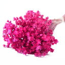 【即納】 プリザーブドフラワー 花材 30%OFF マルセラ【ダークピンク 袋 約15g入】フロールエバー