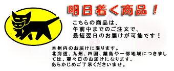 明日着く商品!ご進物用お線香・ローソク付「新生永寿」毎年一番人気の商品です。