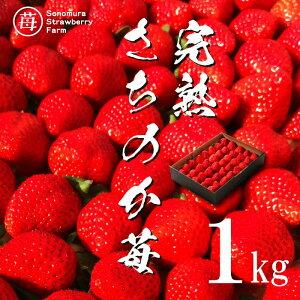 【来シーズン予約承り中】【農家直送】熊本県産 完熟さちのか苺 1kg