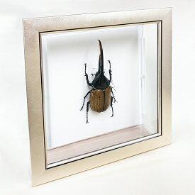 昆虫標本 ヘラクレスオオカブト メタリック調ライトフレーム