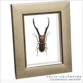 昆虫標本 メタリフェールホソアカクワガタ メタリック調ライトフレーム