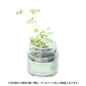 【3万円以上送料無料】DIY・工具・植物カテゴリのミニボトルハーブ(イタリアンパセリ) まとめ売り/卸売り/まとめ買い