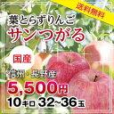 【送料無料】長野産 りんご サンつがる 32〜36玉 約10kg 葉とらずりんご