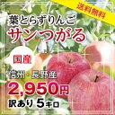 【送料無料】長野産 りんご サンつがる 訳あり 16玉〜18玉 約5kg 葉とらずりんご