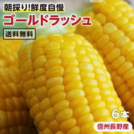 【送料無料】長野県産 とうもろこし ゴールドラッシュ 2Lサイズ 2キロ 6本 | 朝採り 野菜 産地直送 生とうもろこし トウモロコシ コーン 贈り物 ギフト お中元