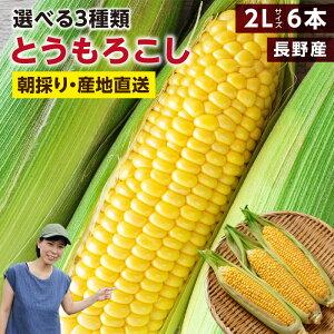 【送料無料】長野県産 とうもろこし 2Lサイズ 6本 約2kg 選べる3品種 ゴールドラッシュ ミルキースイーツ おひさまコーン | トウモロコシ 朝採り 鮮度抜群 当日出荷 夏野菜 産地直送 甘い 生で