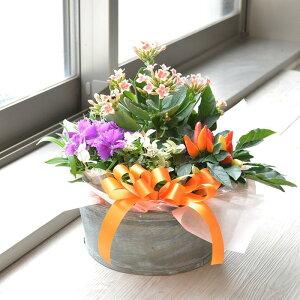 店長おまかせ 季節のカゴアレンジ Sサイズ プレゼント 花 贈り物 お祝い 寄せ植え プレゼント 誕生日 還暦 古希 母の日