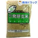 有機米 籾発芽玄米 芽吹き小町(あきたこまち)(2kg)[無洗米 2000g]【送料無料】