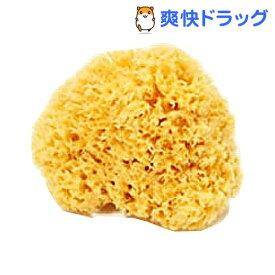 天然海綿ハニコム種 Mサイズ(1コ入)