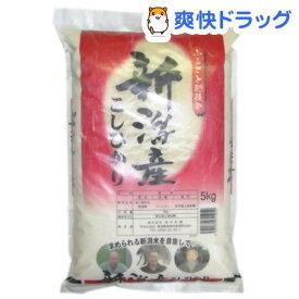 令和元年産 新潟県産 こしひかり(5kg)【田中米穀】[米 コシヒカリ]