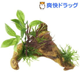 癒し水景 水草付き流木 ニードル(1個)【癒し水景】