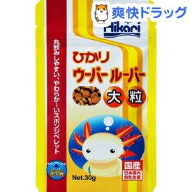 ひかり ウーパールーパー 大粒(30g)【ひかり】