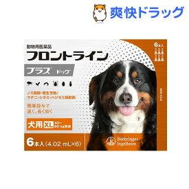 フロントラインプラス 犬用 XL 40〜60kg未満(6本入)【フロントラインプラス】