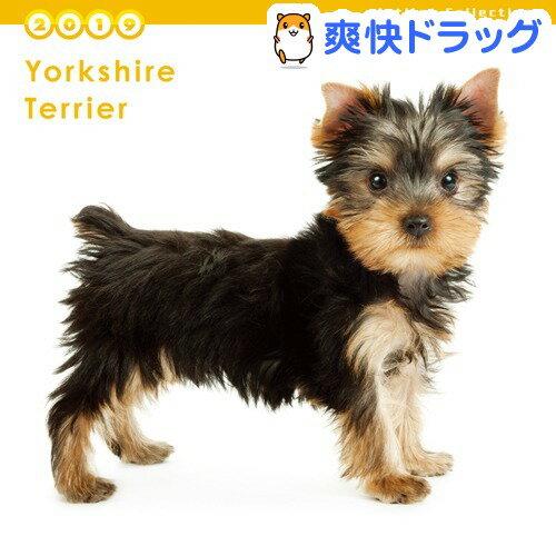 THE DOG 2019年ミニカレンダー ヨークシャー・テリア(1コ入)【ザ ドッグ(THE DOG)】