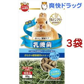 ミニマルランド おいしく健康ケア 乳酸菌(85g*3袋セット)【ミニマルランド】