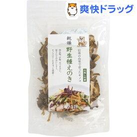 キノコ村 乾燥野生種えのき(15g)