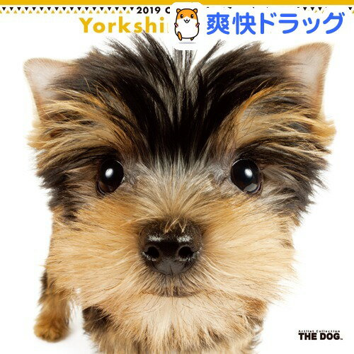 THE DOG 2019年カレンダー ヨークシャー・テリア(1コ入)【ザ ドッグ(THE DOG)】