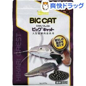 ひかり クレスト ビッグキャット(570g)【ひかり】