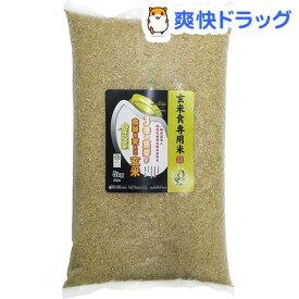 令和元年産おくさま印 金のいぶき(5kg)【幸南食糧】[米]