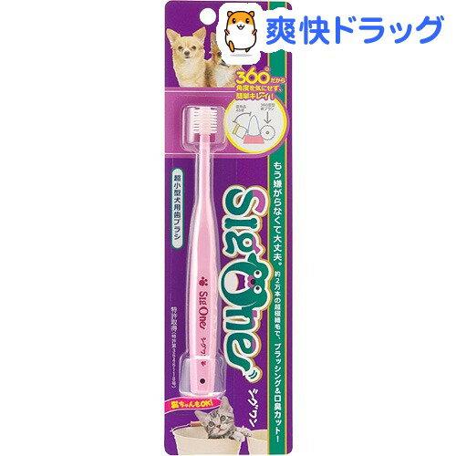 シグワン 超小型犬用歯ブラシ(1本入)【171110_soukai】【171027_soukai】