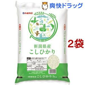 令和2年産 新潟県産コシヒカリ(5kg*2袋セット/10kg)【パールライス】