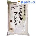 こしひかりブレンド(10kg)【送料無料】