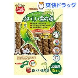 おいしい粟の穂(15本入)