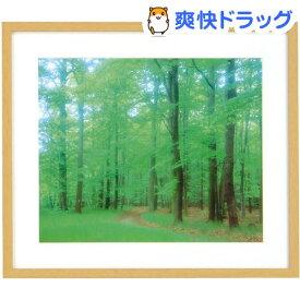 ナカバヤシ 木製写真額縁(角型) 4切判 フ-SW-175-N 木地(1コ入)【ナカバヤシ】