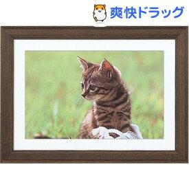 ナカバヤシ 軽量木製写真額縁(角型) W6切判 フ-M95-13-BR ブラウン(1コ入)【ナカバヤシ】