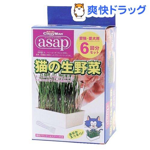 キャティーマン アサップ(asap) 猫の生野菜(6コ入)【171124_soukai】【171110_soukai】【アサップ(asap)】