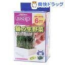 キャティーマン アサップ(asap) 猫の生野菜(6コ入)【170414_soukai】【アサップ(asap)】[猫草]