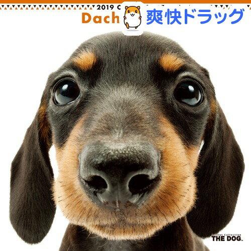 THE DOG 2019年カレンダー ダックスフンド(1コ入)【ザ ドッグ(THE DOG)】