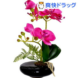 卓上型胡蝶蘭 奏(かなで) ピンク(1コ入)【永光】