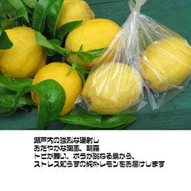 無農薬・草生。潮の香レモン、スモールサイズ(小玉)30〜50個、バラ詰め、 4kg 送料無料 国内消費レモンの 1パーセントに満たない超奇跡のレモンです。美箱・朝採り直送・葉付き。