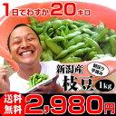 お中元ギフト 朝採り手摘み枝豆(えだまめ)1kgで2,980円。新潟から産地直送!時期によって品種が変わります。贈り物(プレゼント)に夏の定…