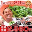 【あす楽】お中元ギフト 朝採り手摘み枝豆(えだまめ)1kgで2,980円。新潟から産地直送!時期によって品種が変わります。贈り物(プレゼン…