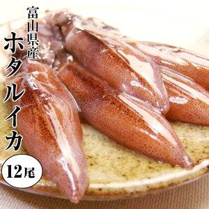 【ホワイトデー包装できます】【生食用 ホタルイカ】(生・冷凍)富山県産。酒の肴(つまみ)に ほたるいか。お刺身しゃぶしゃぶ !日本海の海産物を贈り物(プレゼント)に。沖漬けに。富山湾