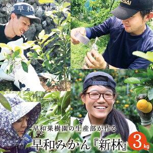 新林みかん 3kg【送料無料】 有田みかん 和歌山 温州 家庭用 産地直送 早和果樹園