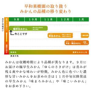 早和果樹園の取り扱うみかんの品種の移り変わり