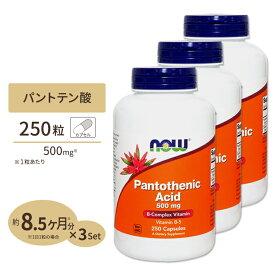 3個セット パントテン酸(ビタミンB5) 500mg 250粒《約8ヵ月分×3個》 NOW Foods(ナウフーズ)美容/健康/サプリ/サプリメント/高含有/ビタミン/